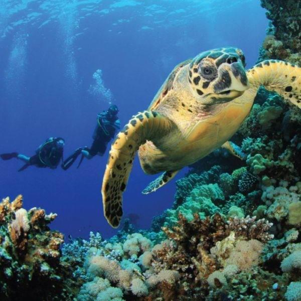 Вам обязательно понравится заниматься этим на острове Самуи - Вам обязательно понравится заниматься этим на острове Самуи