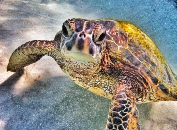 Лучшие места для снорклинга залив Ханаума Гавайи - Фотографии 10 лучших мест в мире для снорклинга
