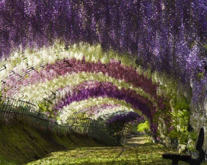 kawachi-fuji-garden Сад Кавати Фужи - 10 лучших экзотических мест для путешествия