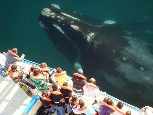киты в Доминикане - Что делать в Доминикане - интересные места, серфинг и другие развлечения