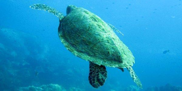 koh-chang-diving-22 - Остров Ко Чанг – отличное место для отдыха в Тайланде