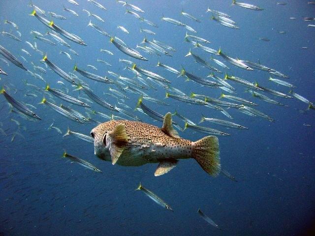 ко чанг дайвинг koh-chang-scuba-diving-oct 09-18