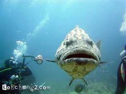 koh chang diving дайвинг на острове ко чанг