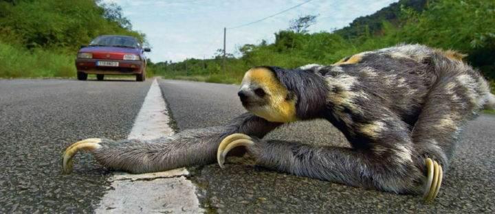 ленивец - Лень, доведённая до совершенства