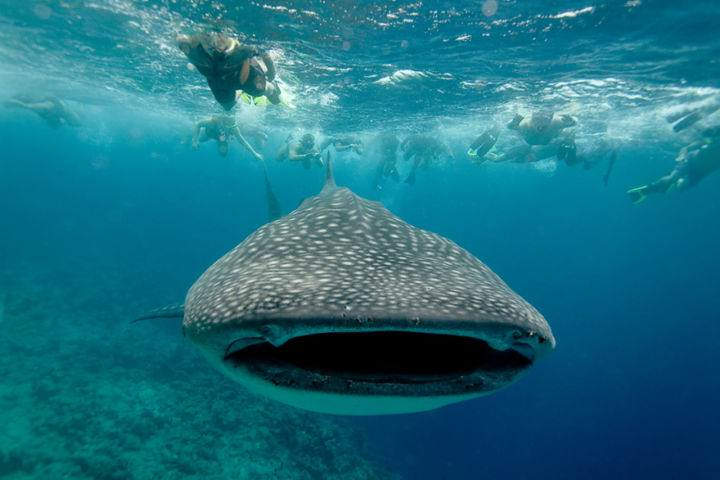Мальдивы под водой maldives