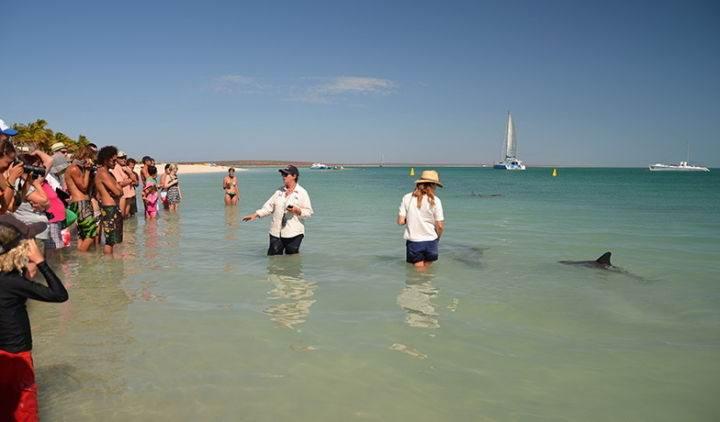 monkey-mia - Дельфинотерапия, или пляж, на который дельфины приплывают посмотреть на людей