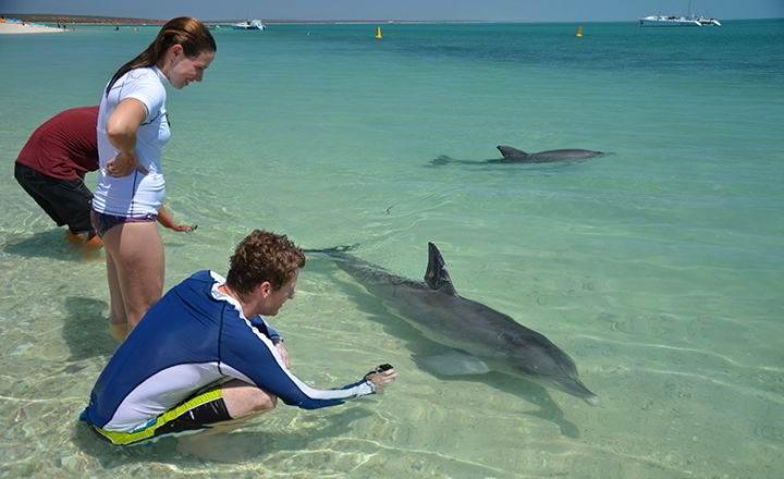 пляж, на который дельфины приплывают посмотреть на людей - Дельфинотерапия, или пляж, на который дельфины приплывают посмотреть на людей