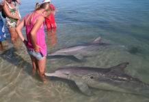 Дельфинотерапия, или пляж, на который дельфины приплывают посмотреть на людей