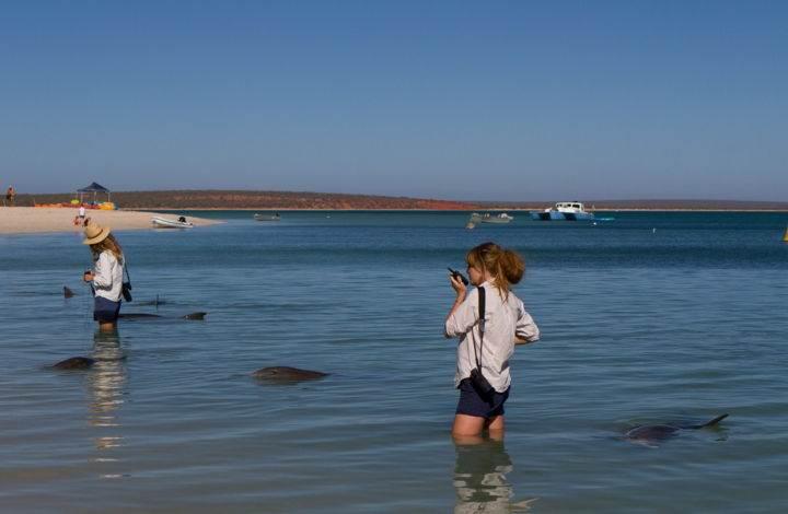 залив дельфинов - Дельфинотерапия, или пляж, на который дельфины приплывают посмотреть на людей