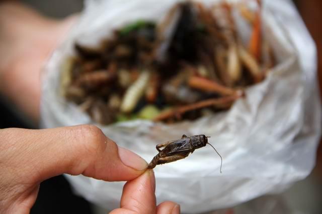 как правильно есть жареных насекомых в Тайланде