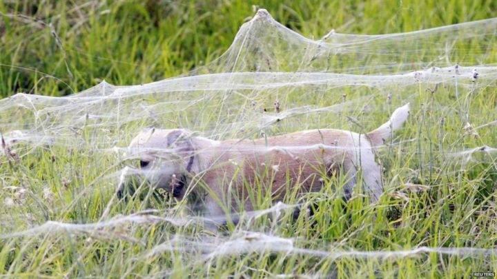 поле паутины - 39 удивительных и сумасшедших природных явлений - часть 2
