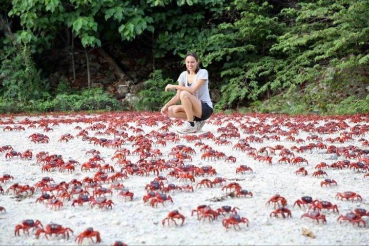 красные крабы - 39 удивительных и сумасшедших природных явлений - часть 2