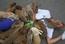 Давайте поиграем с кроликами на острове кроликов!