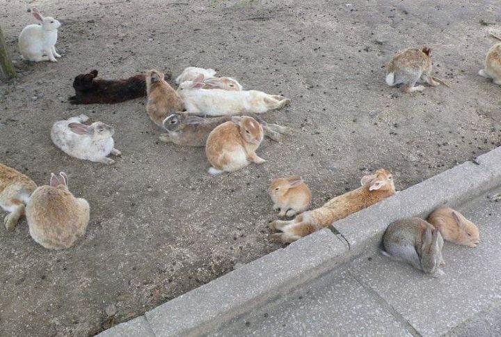 Остров кроликов ostrov-krolikov-9