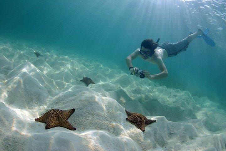 морские звёзды на острове Саона