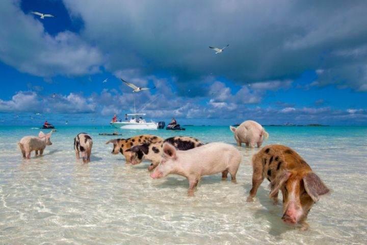 Чего можно ожидать от отдыха на туристических Багамах? - Чего можно ожидать от отдыха на туристических Багамах?