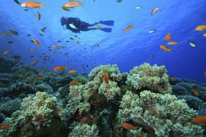 samana diving - Полуостров Самана - пляжи, экскурсии и лучшие места