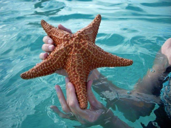 saona морская звезда - Экскурсия на остров Саона - красивейшее место Доминиканы