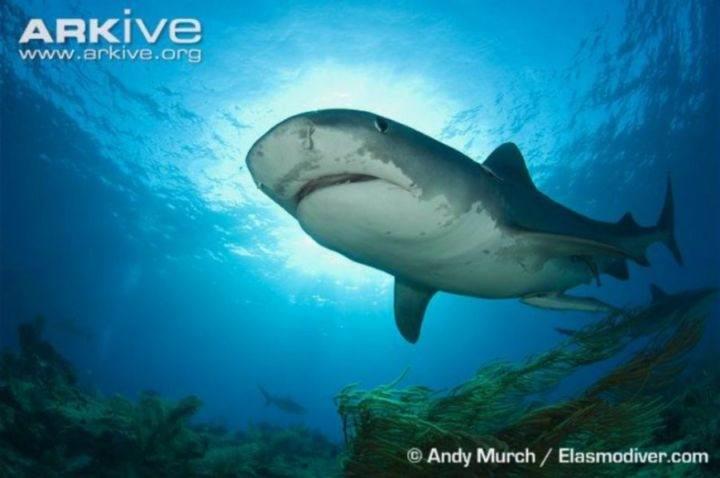 shark - 22 убедительных доказательства, что акулы - самые удивительные существа в море