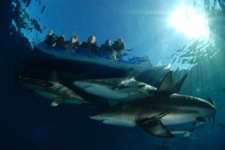 акулы не нападают - 22 убедительных доказательства, что акулы - самые удивительные существа в море