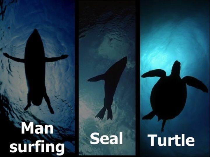 взгляд со стороны акулы - 22 убедительных доказательства, что акулы - самые удивительные существа в море