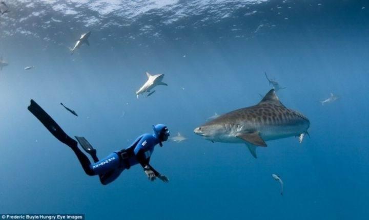 человек и акула - 22 убедительных доказательства, что акулы - самые удивительные существа в море