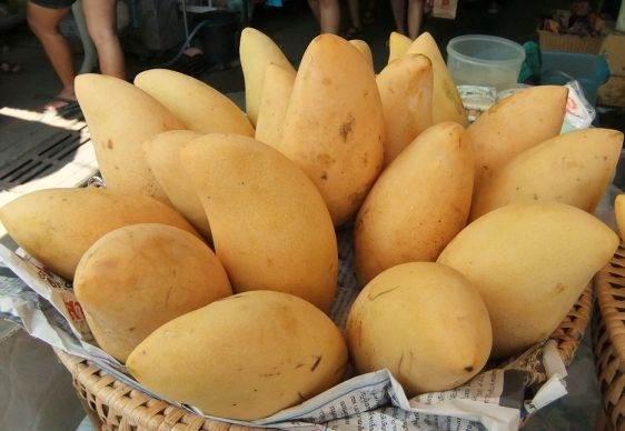 Фрукты Тайланда thai mango