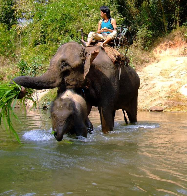 треккинг на слонах таиланд