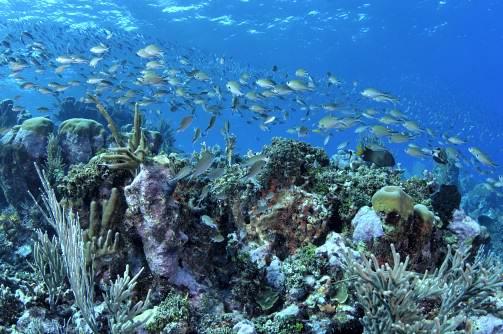 Grenadines, - Обзор дайвинга на островах Ко Самуи, Ko Пха Нган и Ко Тао