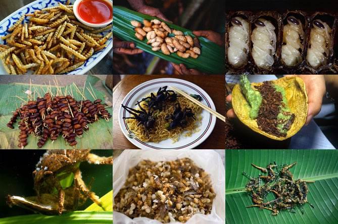 1330375801_0 - Самые вкусные блюда из насекомых в Тайланде