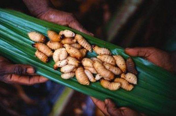 1330444878_istorii3 - Самые вкусные блюда из насекомых в Тайланде
