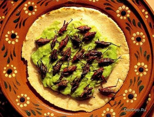 1330446540_112 - Самые вкусные блюда из насекомых в Тайланде