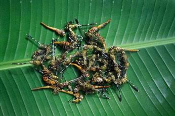 1330447020_41111 - Самые вкусные блюда из насекомых в Тайланде