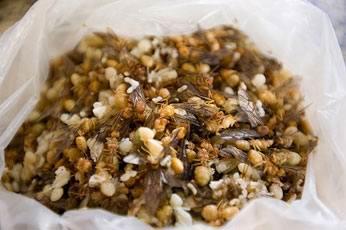 1330447772_222 - Самые вкусные блюда из насекомых в Тайланде