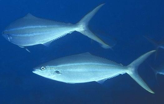 Ichthyology - Дайвинг на Пхукете - большой выбор