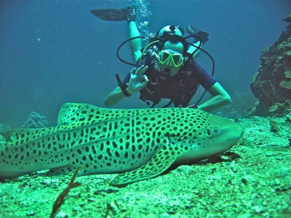 1330847825_sharkp - Дайвинг на Пхукете - большой выбор