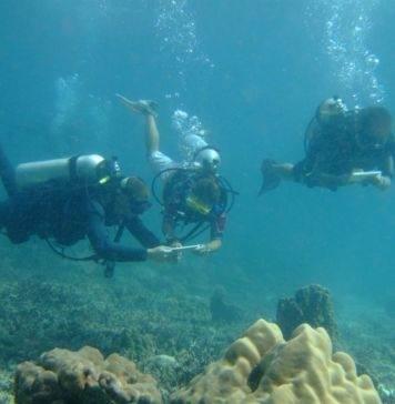"программа ""Исследователи рифа"" дайвинг"