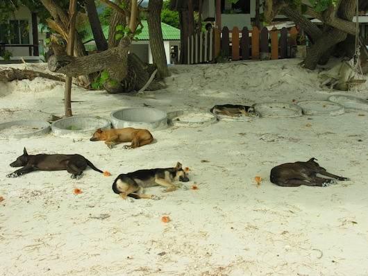 1332182368_ko-lipe7 - Остров Ко Липе - отдых для ценителей первозданной природы и спокойного отдыха