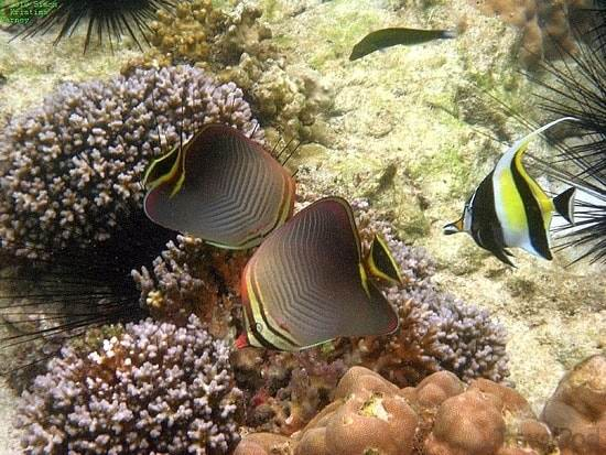 snorkeling-koh-kradan-ko-libong - Ко Крадан - один из самых изолированных островов Тайланда