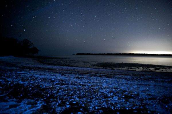 Полюбуйтесь морем из звёзд на Мальдивах - Полюбуйтесь морем из звёзд на Мальдивах