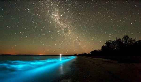 мальдивы vadho-island-sea-star02